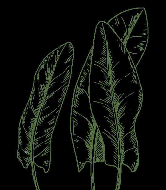 листок левый