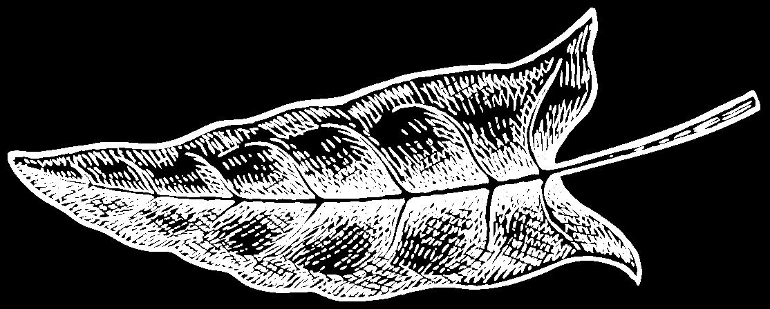 газон правый